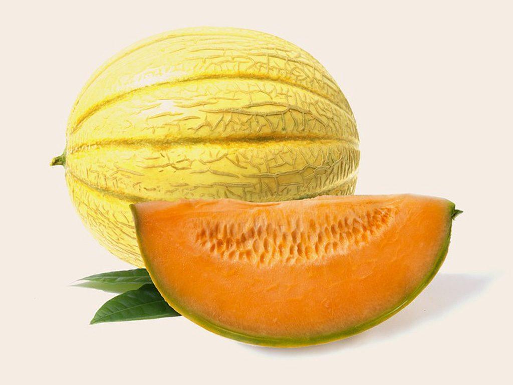 Melone Maceratese